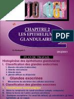 02 LES épithéliums glandulaires D