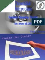 Exposicion De Huesos Yidi Llanos