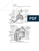 Structure & Function of the Respiratory System