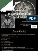 File Cours l3 Bichat 2012 2013 Compress
