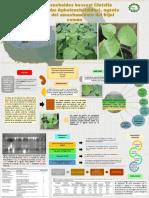 Mapa Conceptual de Articulo 16 Biotecnologia
