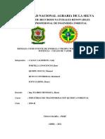 INFORME INDUSTRIAS TANFORMACION QUIMICA FORESTAL