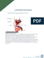 Fonction Reproductrice Chez Lhomme Et La Femme 2010 2011