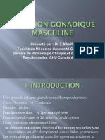 Fonction-gonadique-masculine