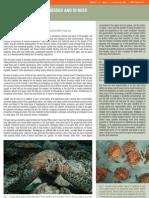 arabian gulf turtles