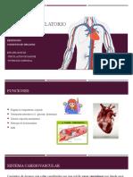 Sistema circulatorio pdf
