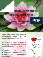 Cours 8- la reproduction chez les angiospermes(partie 1)