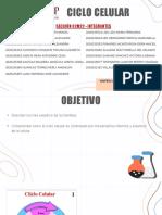 Biologia CICLO CELULAR.Pptx