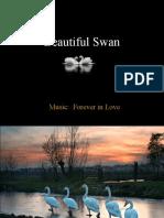 Beautiful_Swan