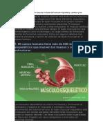 Tres tipos de tejido muscular