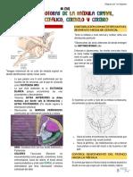 S3 (T8) - Funciones Motoras de La Médula Espinal, Encefálo, Cerebelo y Cerebro