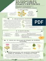 Describir Los Aceites Esenciales A1 E2