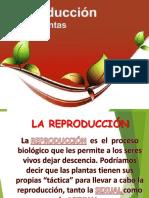 PPT TEMA 6 PROPAGACION DE PLANTAS