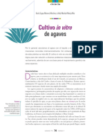 12_72_1_1201_Cultivo_Agaves-L