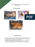 Gemoterapia y los animales