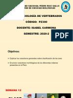 TAXONOMÍA DE AVES