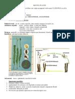 clasa-5-plante
