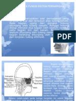 1.Struktur Dan Fungsi System an Pada Manusia