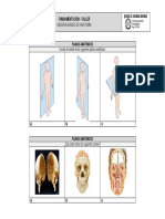 Taller - Generalidades de anatomía