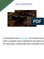 expose_sur_les_salamandres