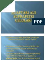 LP 4 Adaptari ale suprafetei celulare