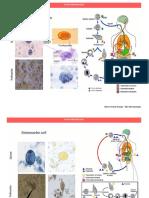 Atlas Parasitologia - Versión Unilibre