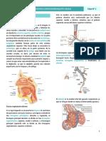 1. Infecciones del tracto respiratorio superior y BA