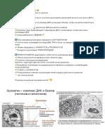 94. эухроматин и гетерохроматин