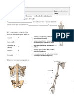 avaliação do esqueleto 2020
