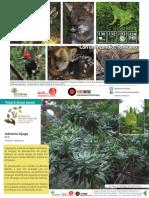 postales-arbustos-nativos