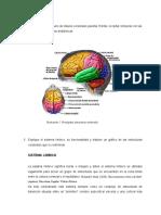 2 Trabajo Neuropsicologia