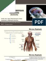 AT 03 - Anatomia do Sistema Nervoso - parte 2