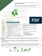 ev. sum. bio. cl6 Plante (1)