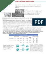 5. Ribosomi Lisosomi Perossisomi(1)