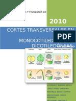 CORTES TRANSVERSALES EN PLANTAS MONOCOTILEDÓNEAS Y DICOTILEDÓNEAS