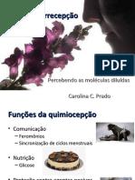 Quimiorrecepção (1)