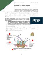 Les Ribosomes Et La Synthèse Protéique B6