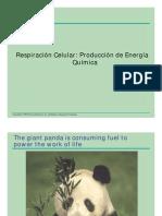 Respiracion Celular PDF