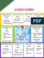 PRINCIPALES GLANDULAS Y SUS HORMONAS