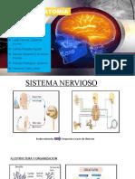 Exposicion de Neuroanatomia 1
