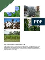 Plantas textiles