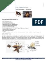 Ciclo de Vida Cucarachas y Chiripas