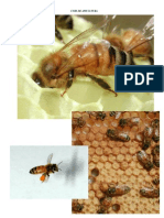 _Curs_de_apicultura_39_pag