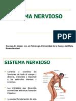 Sistema_nervioso- Ismael Cáceres. Lic en Psicología.