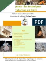 Champignons_les techniques de production en forêt