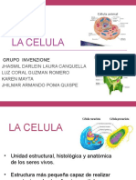 COMPONENTES CITOPLASMATICOS MEMBRANOSOS---