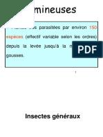 4. Insectes des légunineuses