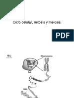 3_El_ciclo_celular_mitosis_y_meiosis-09-10