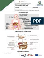 ficha Informativa n.º 2- Sistema Digestivo em esquemas