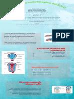 Desarrollo Embriológico Del S.N.C Grupo#5